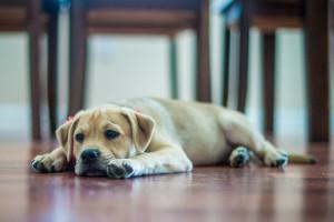 PUPPY LONDON – Pet photographer